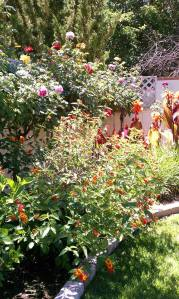 The rose garden at Crow Hollow